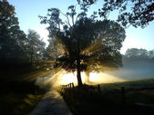 Dawn Light and Trees — Stock Photo