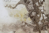 Termite Damage — Stock Photo
