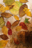 Art grunge background with autumn leaves — Stock Photo