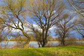 Paysage magnifique berge avec l'herbe verte, des arbres et ciel bleu plein de — Photo