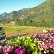 A Mountain Country View From a Flowery Balcony — Stock Photo