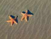 Two Starfish on the Beach with Windswept Sand Ripples — Stock Photo