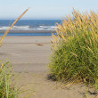 Green and Yellow Beach Grass on a Path to the Ocean — Stock Photo