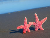 Two Red Starfish with Shadows on the Beach with Ocean Waves in the Backgrou — Stock Photo