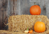 Pumpkins and gourds on straw — Stock Photo