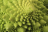 Natures own fractals — Stock Photo