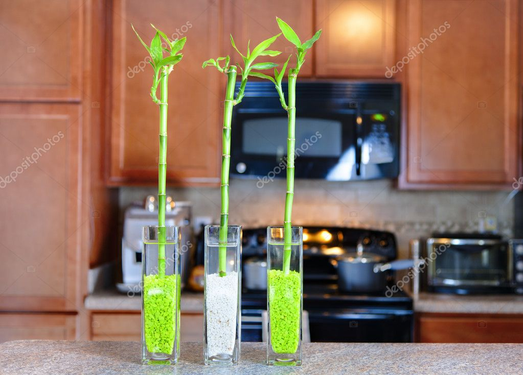 Lucky Bamboo Plants In The Kitchen Stock Photo Alexeys