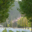 Flags at National Cemetary — Stock Photo #7624419