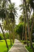Road on tropical island — Stockfoto