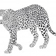 Leopart black on a white background - Stock Vector