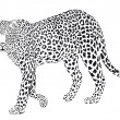 Leopart black on a white background — Stock Vector