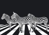 Cebra en paso de peatones — Vector de stock