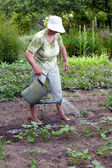 Senior woman working in garden — Stock Photo
