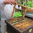 Foto Stock: Beekeeping in small czech farm