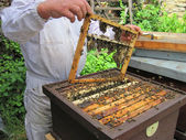 Beekeeping in the small czech farm — Stock Photo