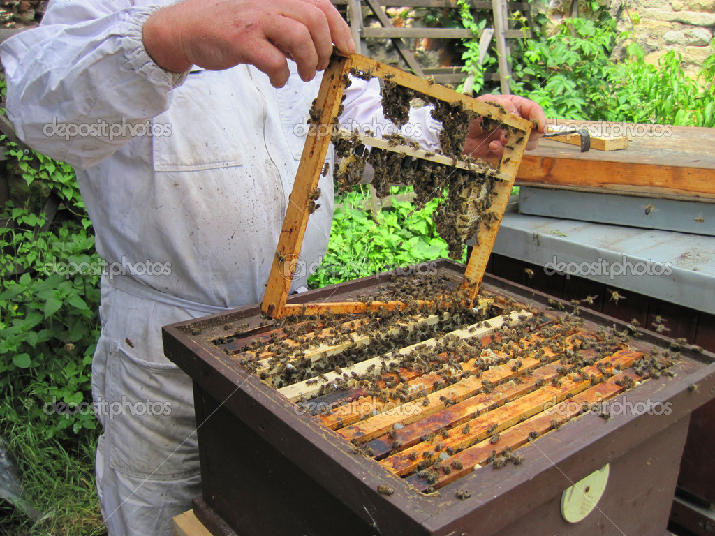 Beekeeping in the small czech farm in the summer — Stock Photo #7135842