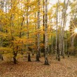 Very nice autumn forest — Stock Photo