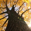Old autumn tree — Stock Photo #7519506