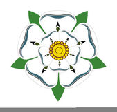 White rose of Yorkshire — Stock Photo