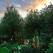 Twilight garden — Stock Photo #6762267