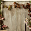 Stock Photo: Autumn vintage background