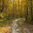 Autumn forest — Stock Photo #7322293