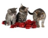 Three kittens — Stock Photo