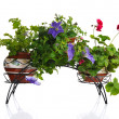 Plants in pot - Stockfoto