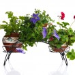 Plants in pot - 