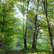 Beautiful sunlight in the forest — Stock Photo