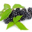 Fresh berry blackberry with green leaf isolated on white background — Stock Photo