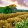 Combine harvester working on the field — Stock Photo