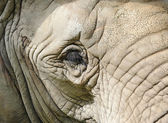 Eye of elephant close up — Stock Photo
