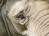öga elefant på nära håll — Stockfoto