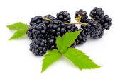 新鲜浆果黑莓与孤立在白色背景上的绿色叶 — 图库照片