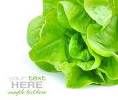 Salada verde fresca, isolada no fundo branco — Foto Stock