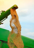 Corn harvesting — Stockfoto
