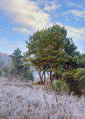 Frosted autumn meadow — Stock Photo
