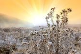 Frosted autumn meadow at dawn — Stockfoto