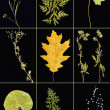 Herbarium collage — Stock Photo