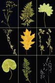 Herbarium collage — Stock Photo