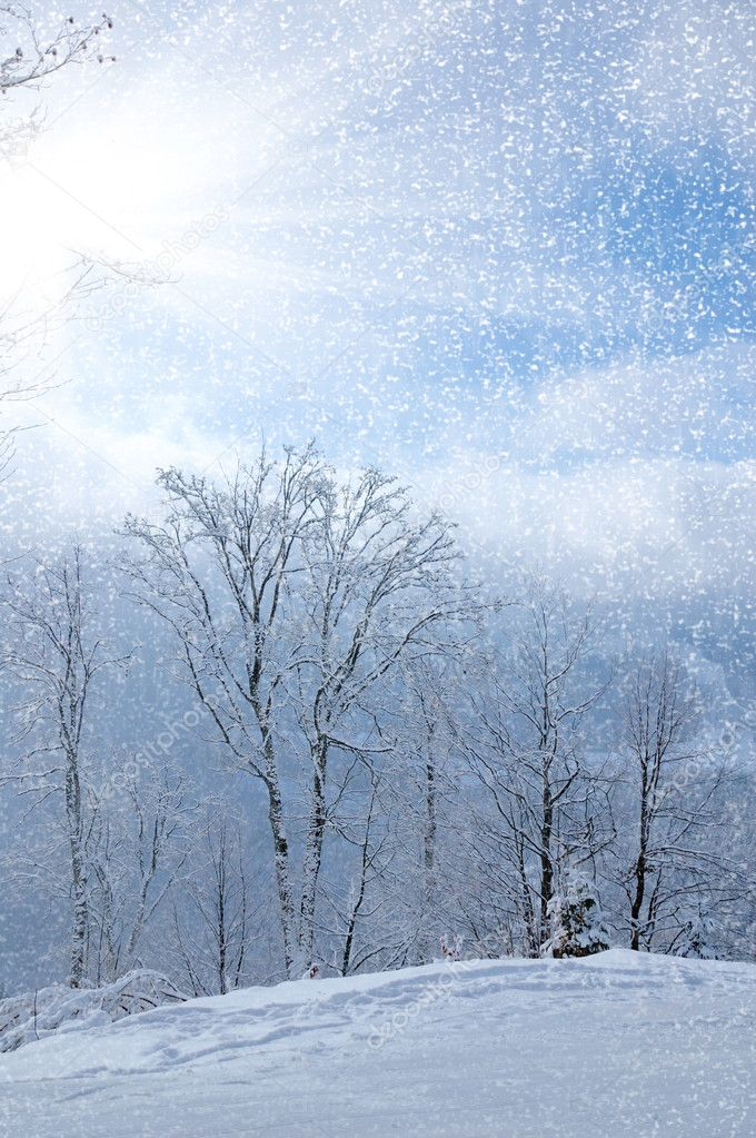 Beautiful winter landscape with snow covered trees  Stock Photo #7031507