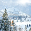 Stock Photo: Winter trees in mountains covered with fresh snow