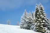 Schöne Winterlandschaft mit Schnee bedeckt, Bäume — Stockfoto