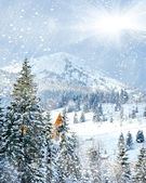 Winter trees in mountains covered with fresh snow — Stock Photo