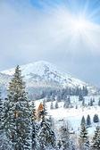 Winter bäume in bergen mit frischem schnee bedeckt — Stockfoto
