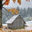 First autumn sudden snow — Stock Photo #7323887