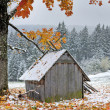 First autumn sudden snow — Stock Photo