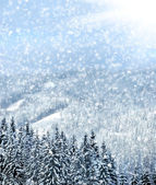Winter trees in mountains covered with fresh snow — Stockfoto