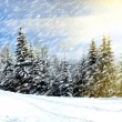 Beautiful winter landscape — Stock Photo #7519641